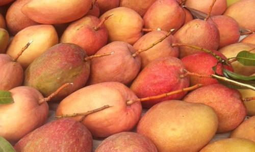 Du lịch Đài Loan - Thưởng thức những trái xoài mùa hè thơm ngon